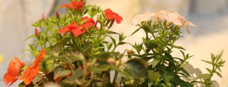 Restó 9 presentó su carta primavera-verano con nuevos sabores